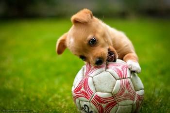 Смешной щенок грызет мячик
