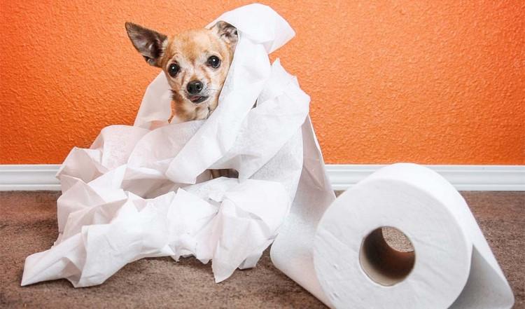 Собака обматалась туалетной бумагой