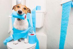 Собака с туалетной бумагой