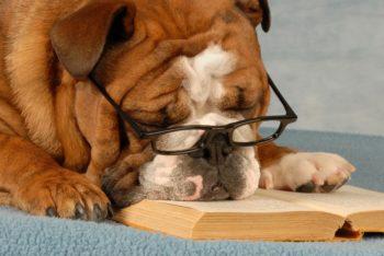 Собака в очках