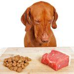 Собака выбирает мясо