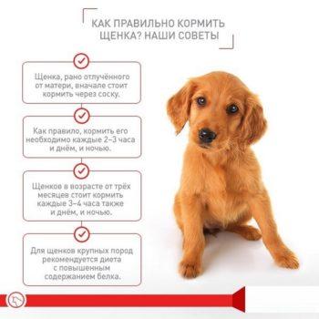 Советы по кормлению щенка