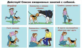 Список дел с собакой