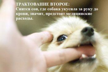 Толкование сна к чему укусила собака