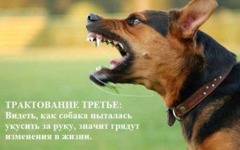 Трактовка сна про укус собаки