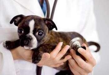 Доктор держит щенка на руках