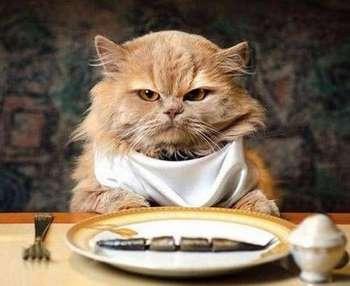 Кошка сидит перед тарелкой с рыбой