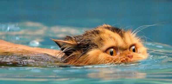Кот плывет