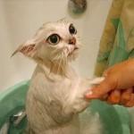Кота моют в тазике