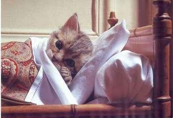 Котенок в постели