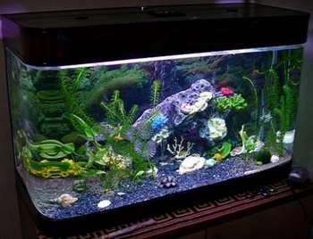 Красивый аквариум