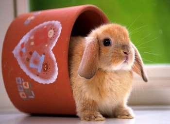 Рыжий кролик в цветочном горшке