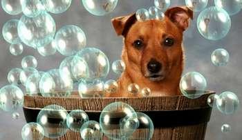 Собака купается в тазике