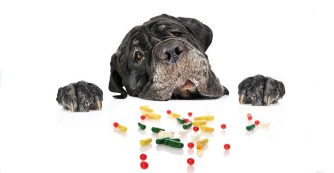 Собака смотрит на пилюли