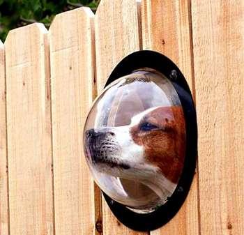 Собака смотрит в окошко в заборе