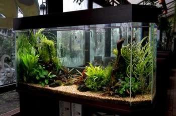 Большой аквариум