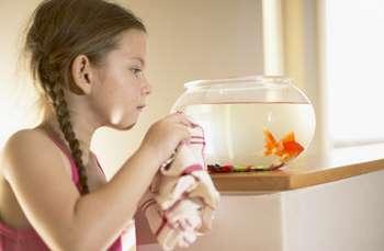 Девочка протирает маленький аквариум