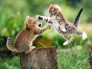 Два котенка играют на траве