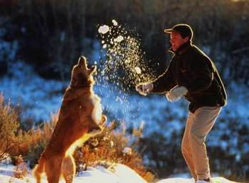 Хозяин играет с собакой в снежки