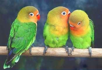 Красивые попугайчики