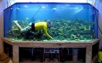 Мужчина плавает в очень большом домашнем аквариуме