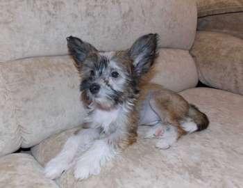 Небольшой щенок на диване
