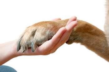 Собака дала лапу в руку