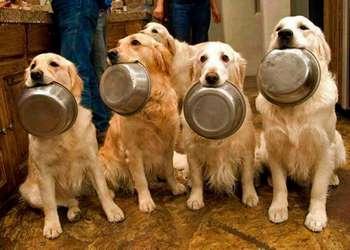 Собаки держат миски в пасти