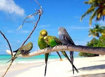 Четыре волнистых попугая на ветке на море