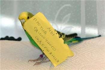 Попугай держит записку