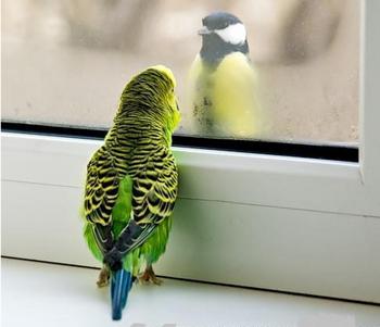 Попугай смотрит на птицу в окно