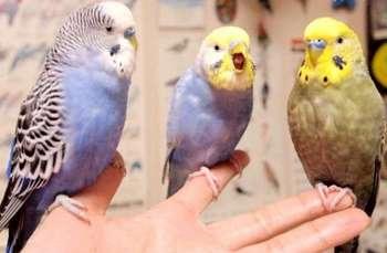 Три волнистика на руке