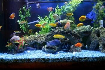 Большой аквариум с рыбками