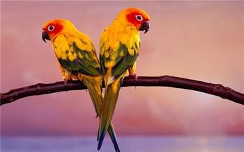 Два красивых ярких попугая