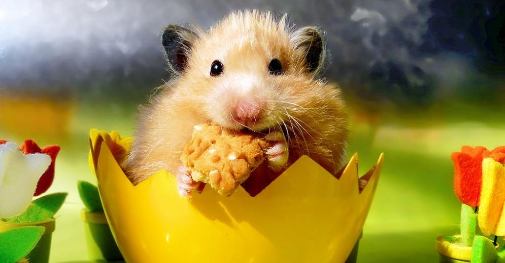 Джунгарик сидит и ест