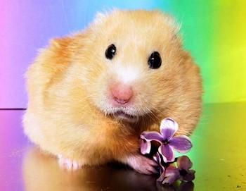 Джунгарский хомяк с цветочком