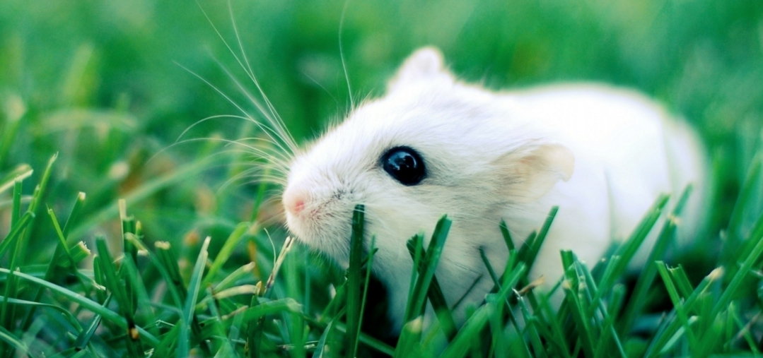 Хомяк сидит в зеленой траве