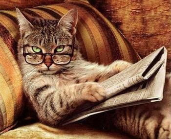 Кошка читает газету в очках
