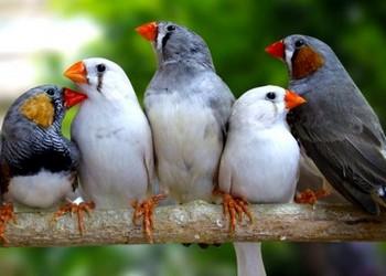Пять попугаев