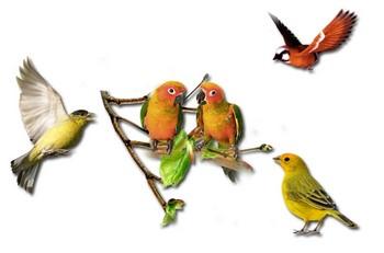 Разные птицы