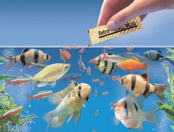 В аквариум с рыбками сыпят корм