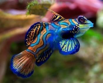 Яркая необычная рыбка