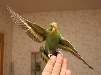 Зеленый попугай на руке