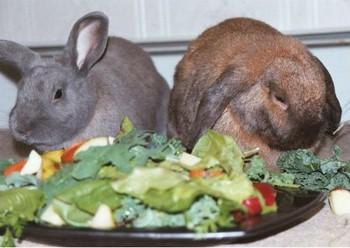 Два кролика перед тарелкой с зеленью