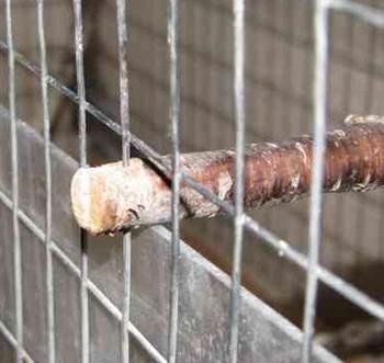 Крепление самодельной деревянной жердочки в клетке