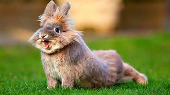 Смешной кролик тянется