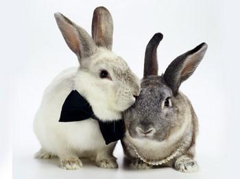 Два кролика в бусах и бабочке