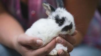 Маленький крольчонок в руке