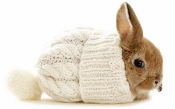 Маленький рыжий кролик в шапочке