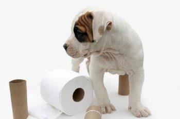 Маленький щенок и туалетная бумага